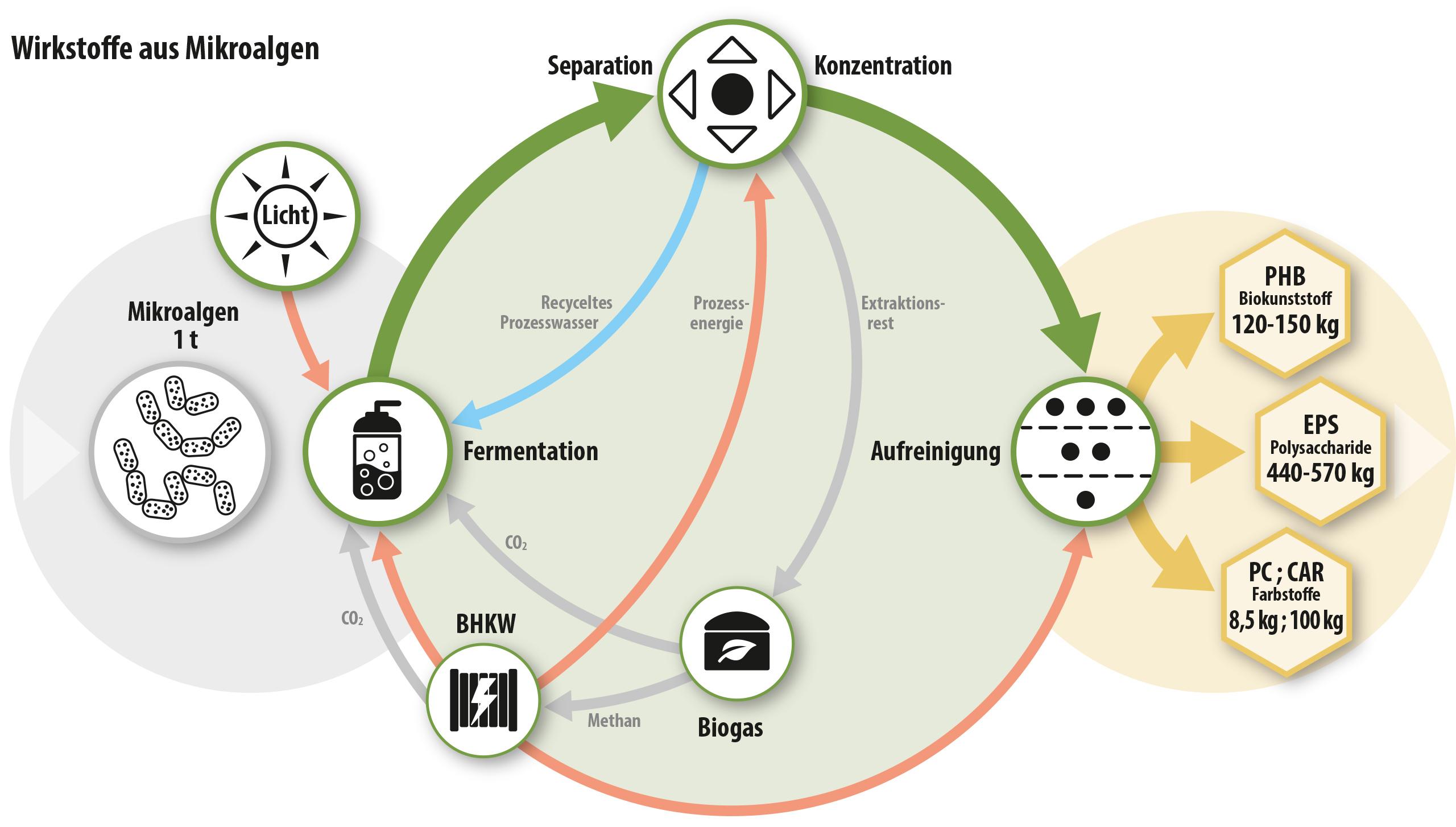 Prozessschema zur Gewinnung von Wertstoffen aus Algen mittels Zero-Waste Prinzip.